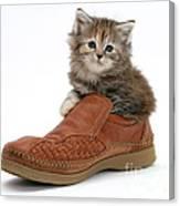 Kitten In Shoe Canvas Print