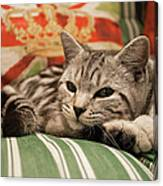 Kitten Lying On Striped Couch Canvas Print