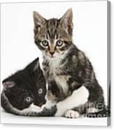 Kitten Pals Canvas Print