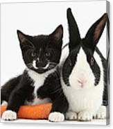 Kitten, Rabbit And Carrot Canvas Print