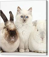 Kitten With Rabbits Canvas Print
