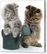 Kittens And Watering Can Canvas Print