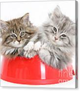 Kittens In A Food Bowl Canvas Print