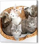 Kittens In Basket Canvas Print