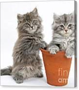 Kittens In Pot Canvas Print