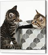 Kittens Playing With Box Canvas Print