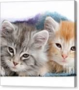 Kittens Under Blanket Canvas Print