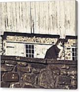 Kitty On Guard Canvas Print