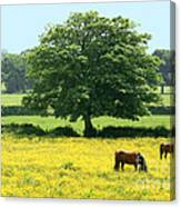 Knee High In Buttercups Canvas Print
