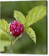 Knox Berry Farms Boysenberry Fruit Canvas Print