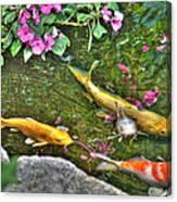 Koi Fish Poses Canvas Print