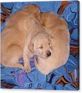 Lab Pups 2 Canvas Print