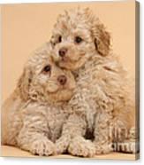 Labradoodle Puppies Canvas Print