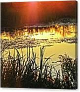 Lacassine Sundown Canvas Print