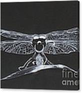 Lace Wings Canvas Print