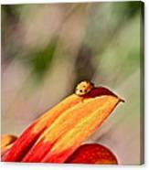 Lady Bug On A Flower Canvas Print