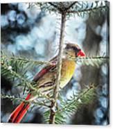 Lady Cardinal Canvas Print