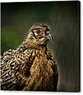 Lady Pheasant Canvas Print