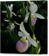 Lady Slippers Canvas Print