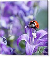 Ladybug And Bellflowers Canvas Print