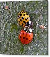 Ladybug Love Canvas Print