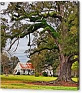 Laid Back Louisiana Canvas Print