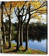 Lake And Trees, Mount Stewart, Co Down Canvas Print