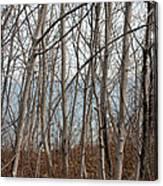 Lake Beyond The Trees Canvas Print