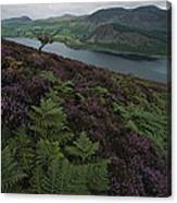 Lake District View From A Hillside Canvas Print