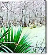 Lake Martin Swamp View Canvas Print