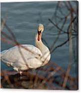 Lake Ontario Swan Canvas Print