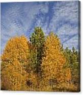 Lake Tahoe Aspen Sky Canvas Print