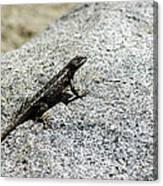Lake Tahoe Lizard On A Hot Rock Canvas Print
