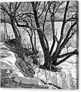 Lakeshore  Canvas Print