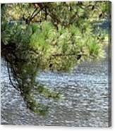Lakeside Pines Canvas Print