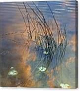 Lakeside Reeds Canvas Print