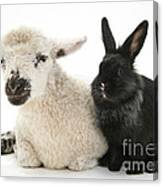 Lamb And Rabbit Canvas Print