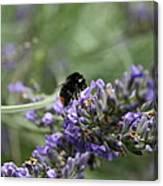 Landing Bee Canvas Print
