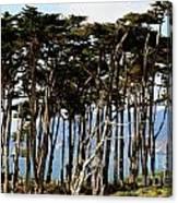 Lands End Trees Canvas Print