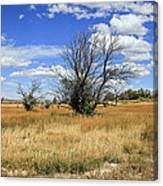 Landscape In Wy Canvas Print