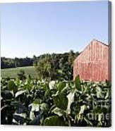 Landscape Soybean Field In Morning Sun Canvas Print