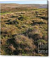 Landscape With Cow Grazing In The Field . 7d9942 Canvas Print