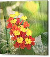 Lantana Blank Greeting Card Canvas Print