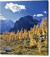 Larch Trees From The Saddleback Trail Canvas Print