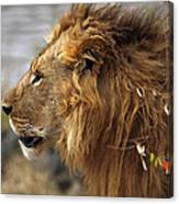 Large Male Lion Emerging From The Bush Canvas Print
