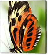 Large Tiger Butterfly Canvas Print