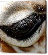Lashes On The Eye Canvas Print