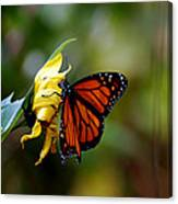 Last Kiss Of The Butterfly Canvas Print