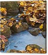 Last Signs Of Autumn 0438 Canvas Print