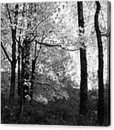 Lasting Leaves Canvas Print